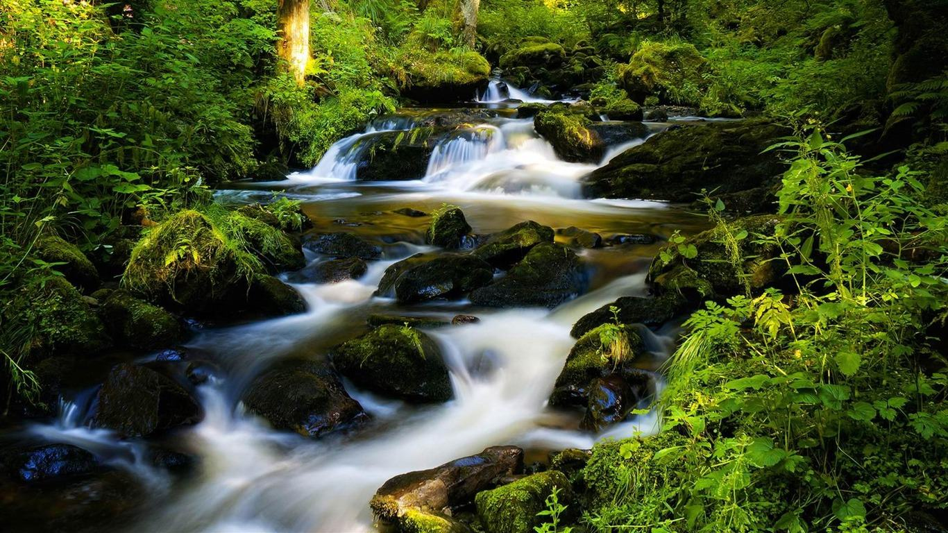 Wallpapers Backgrounds   black forest germany Nature Wallpapers 1366x768