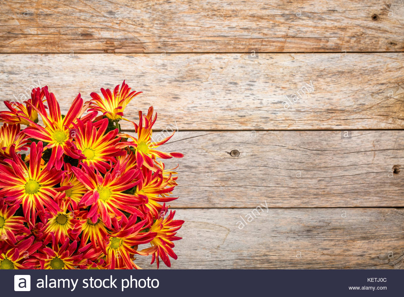 rustic barn wood background with a bouquet of fall mums and copy 1300x956