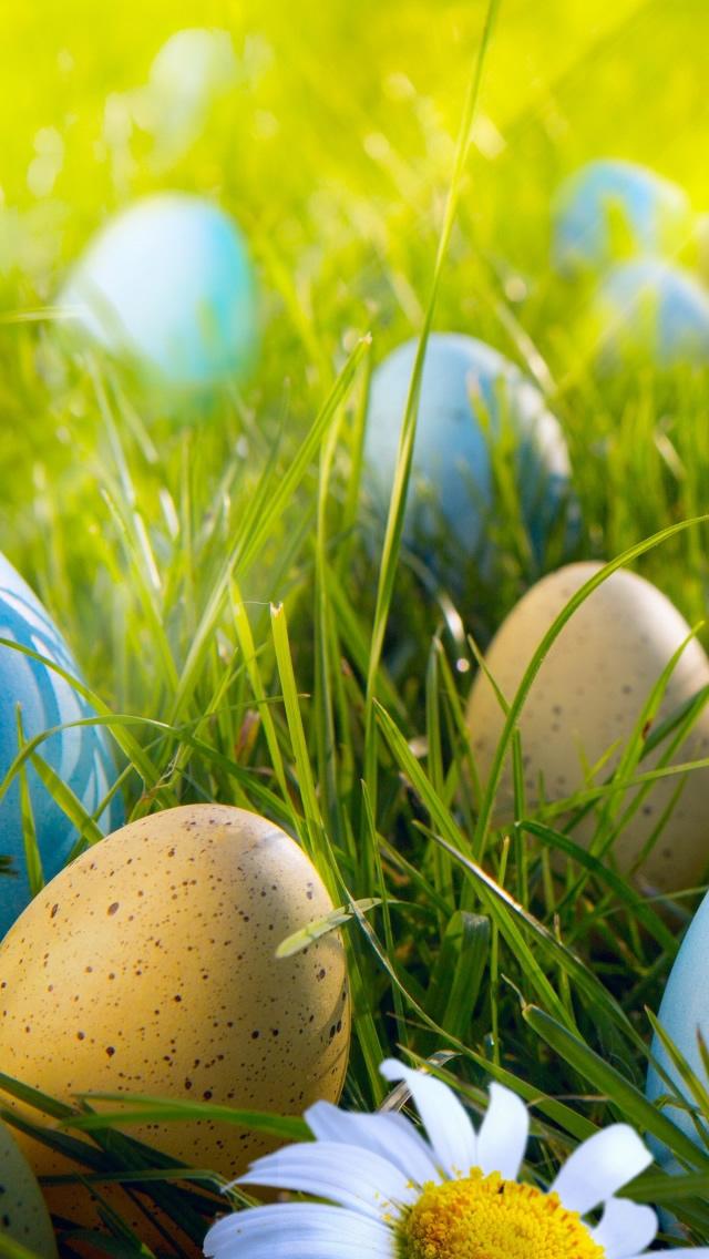 Easter Egg Hunt iPhone 5s Wallpaper Download iPhone Wallpapers iPad 640x1136