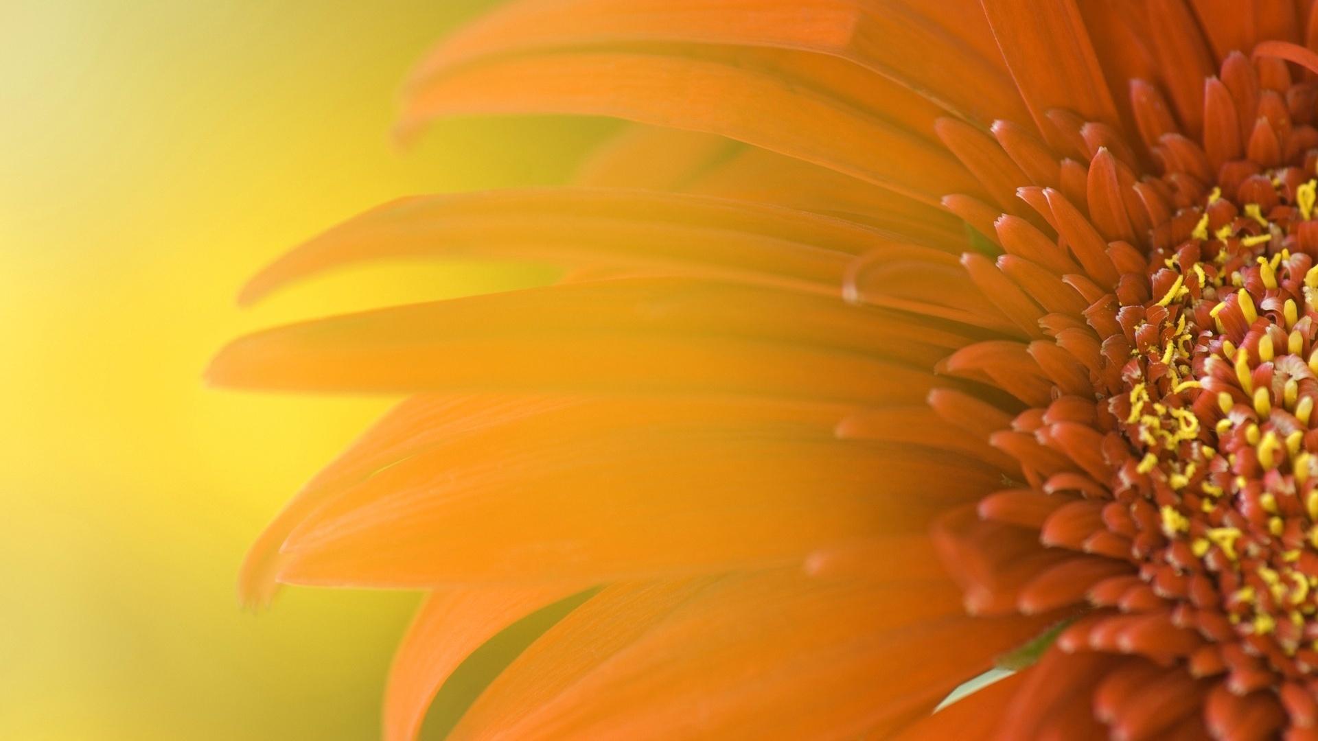 Orange Flower Hd 863869 863842 Wallpaper