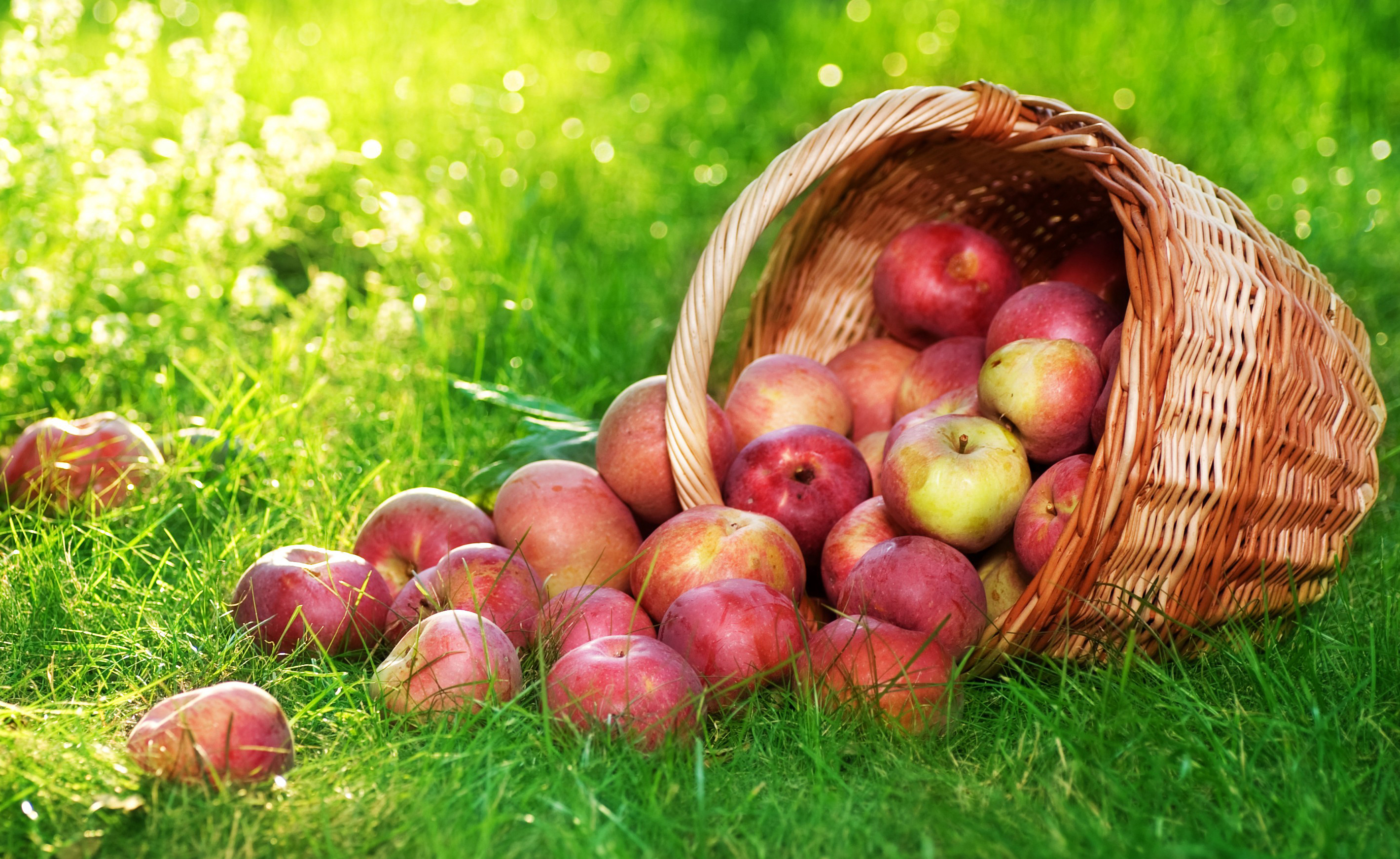 Apple Fruit Bucket on Grass Wallpapers 2839x1743
