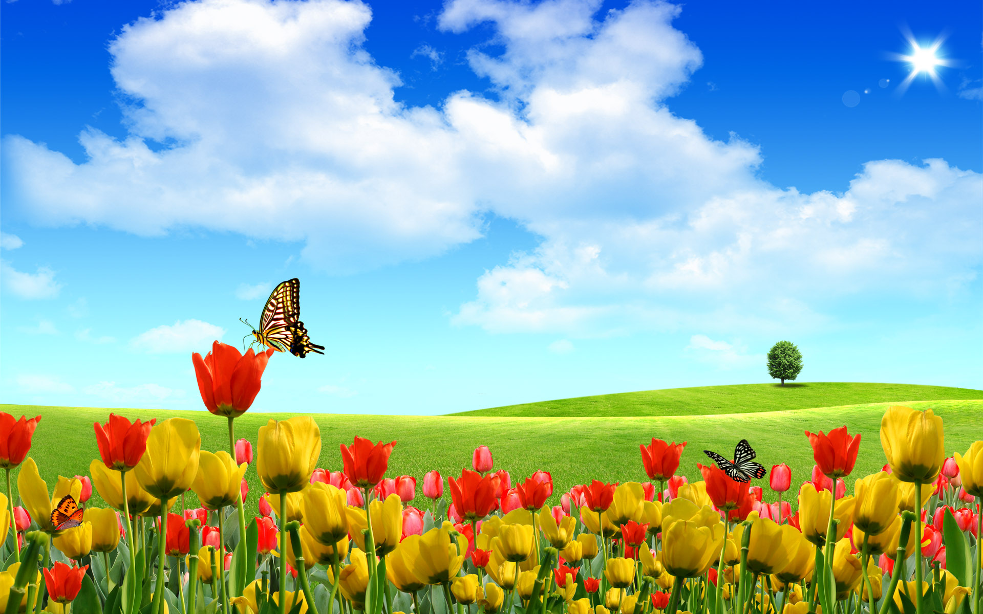 Scenery Wallpaper Includes Beautiful Buds Boasting of Its 1920x1200
