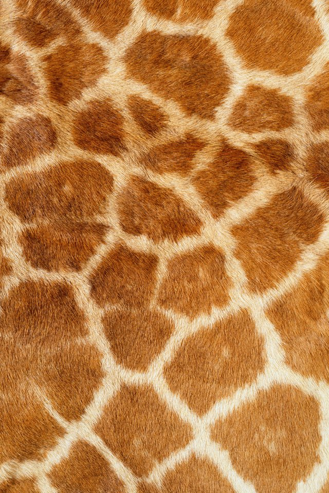 Giraffe Skin Simply beautiful iPhone wallpapers 640x960