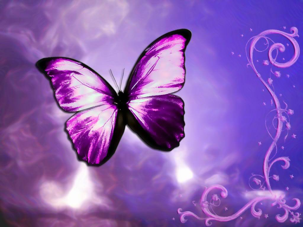 Free Download Yorkshire Rose Beautiful Butterflies 1024x768 For