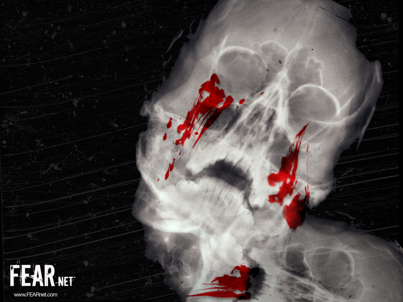 Skull Head HD Wallpaper Compilation | Scary Wallpapers