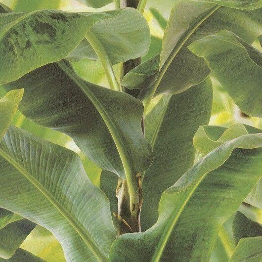 Large Banana Leaf Wallpaper Paste The Wall Vinyl 473407 eBay 530x530