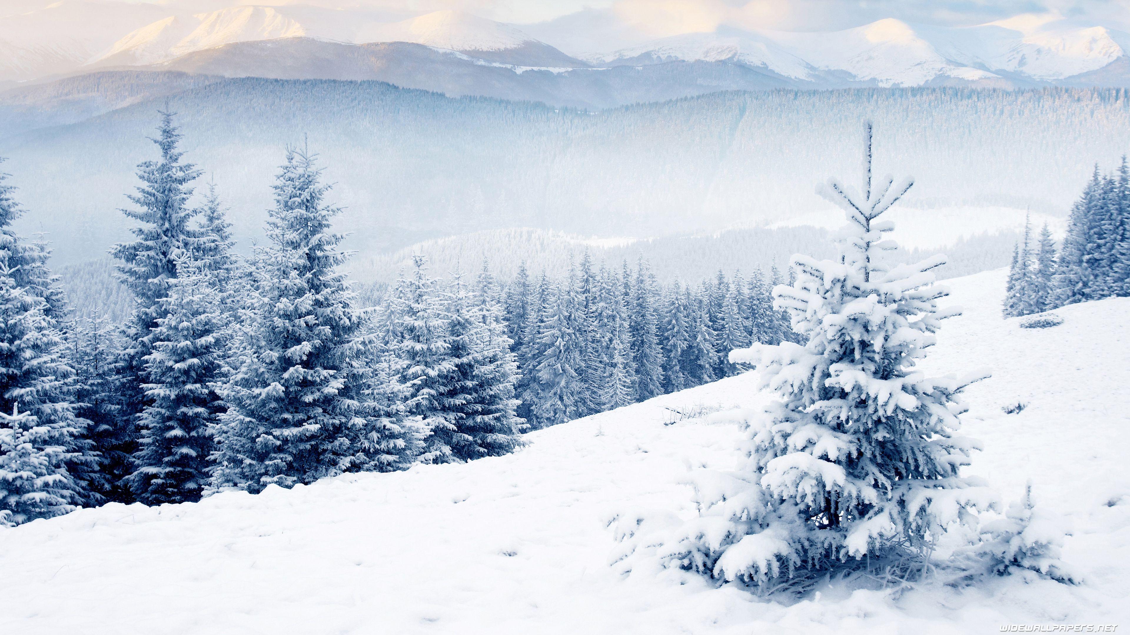 Winter Wallpapers Hd   Winter Desktop Wallpaper 4k 136625 3840x2160