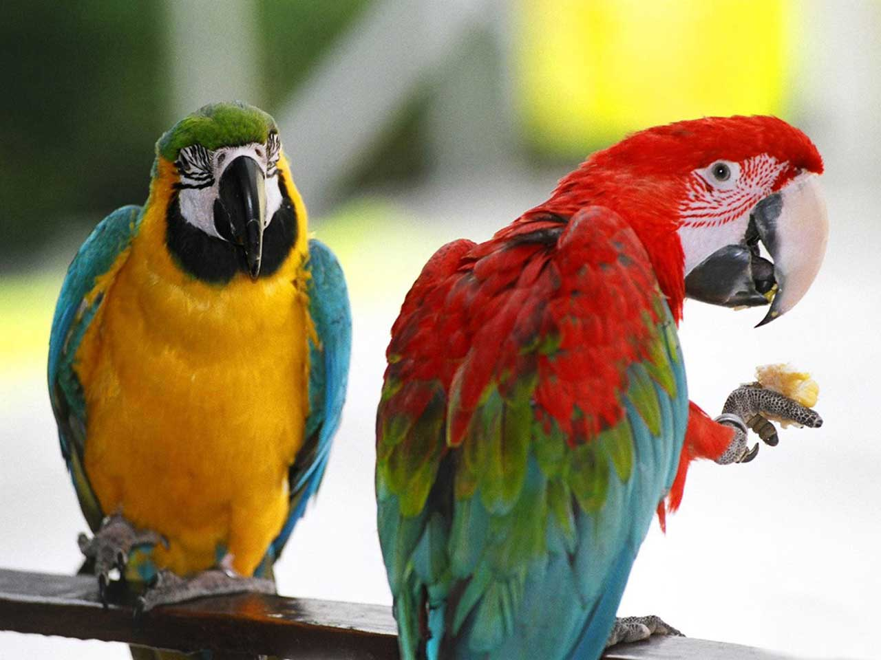 All Wallpapers Parrot Hd Wallpapers 1 1280x960