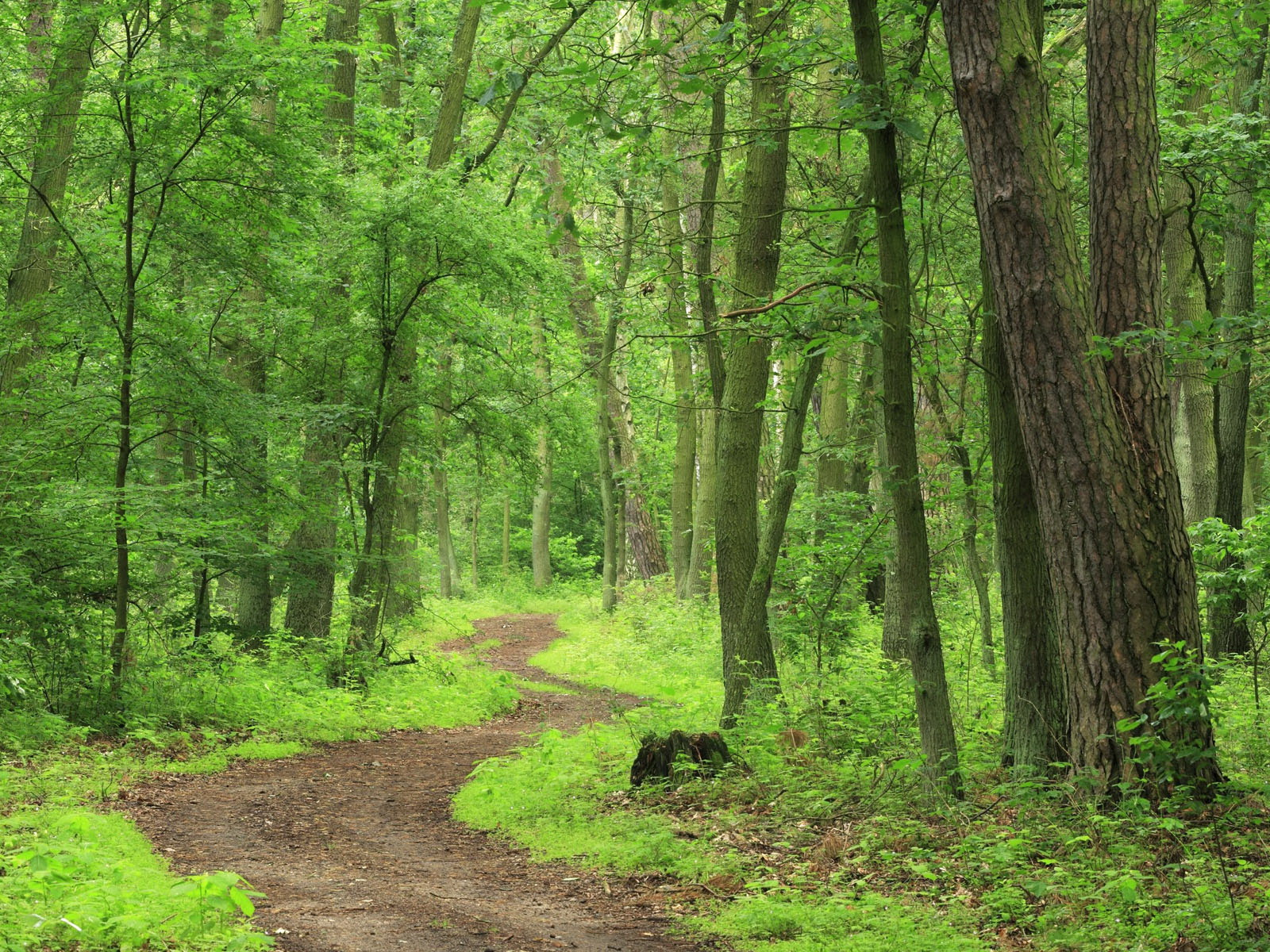 green forest hd wallpapers green forest hd wallpapers green forest 1600x1200