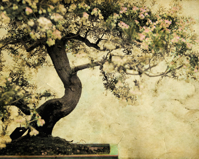 Your Moment Of Zen Wall Mural   Contemporary   Wallpaper   by Murals 640x512