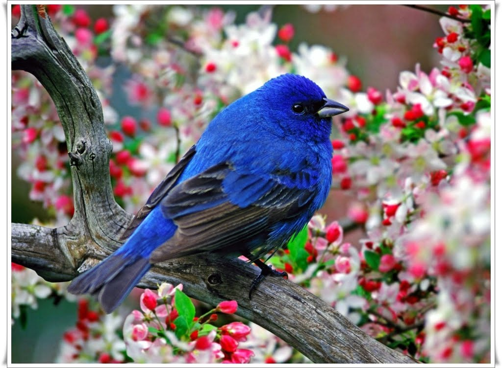 Colorful Blue bird wallpaper   Animals Wallpapers 1024x752