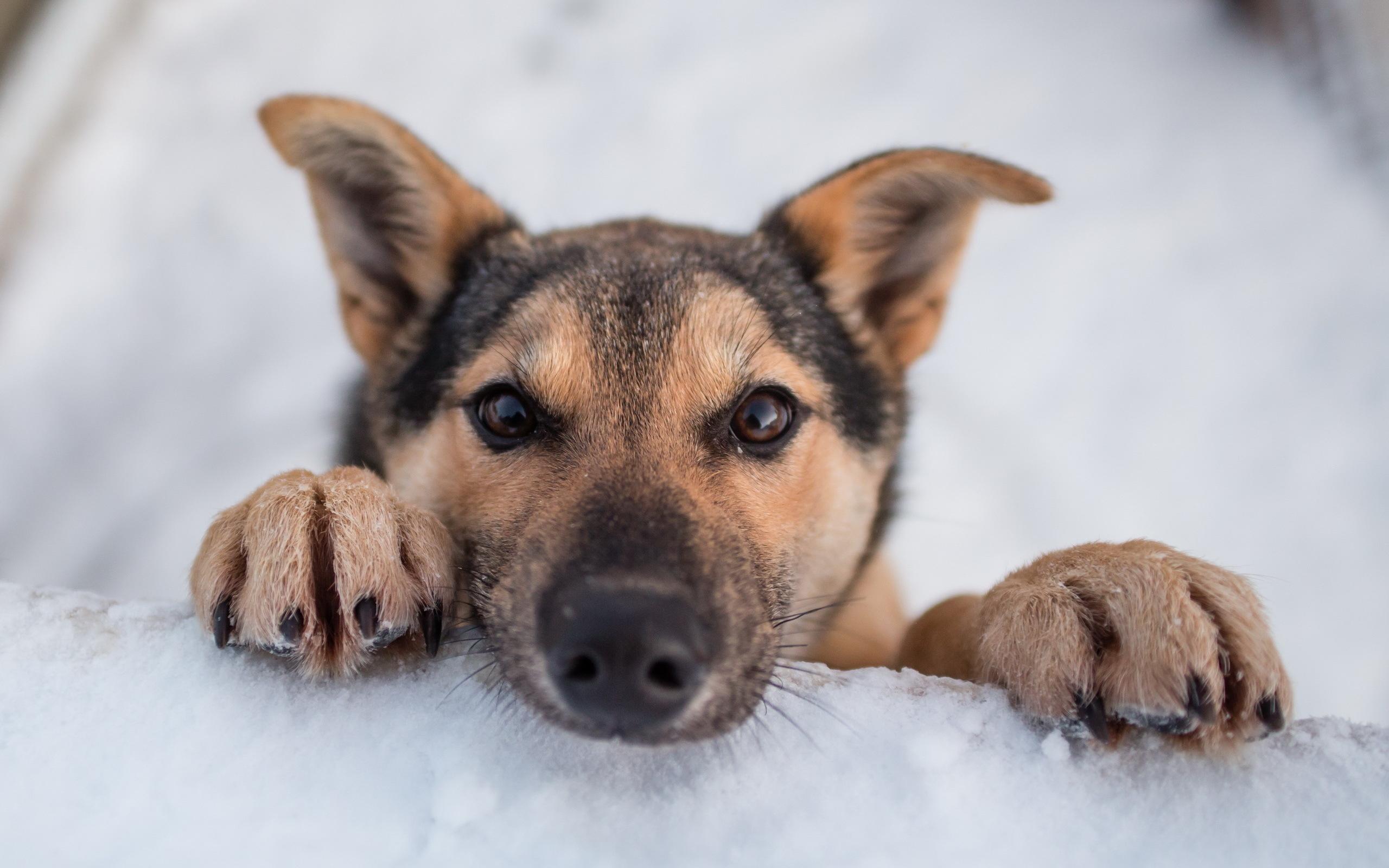 Puppies dogs puppy winter snow wallpaper 2560x1600 219389 2560x1600