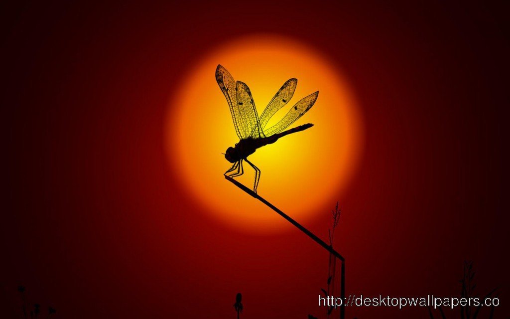 Dragonfly Insect WallpaperDesktop Wallpapers Download 1024x640