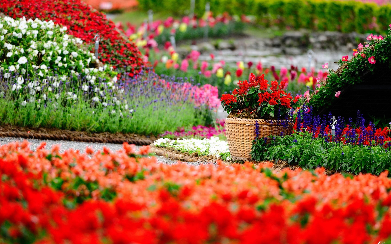 Flower Garden Backgrounds 2880x1800