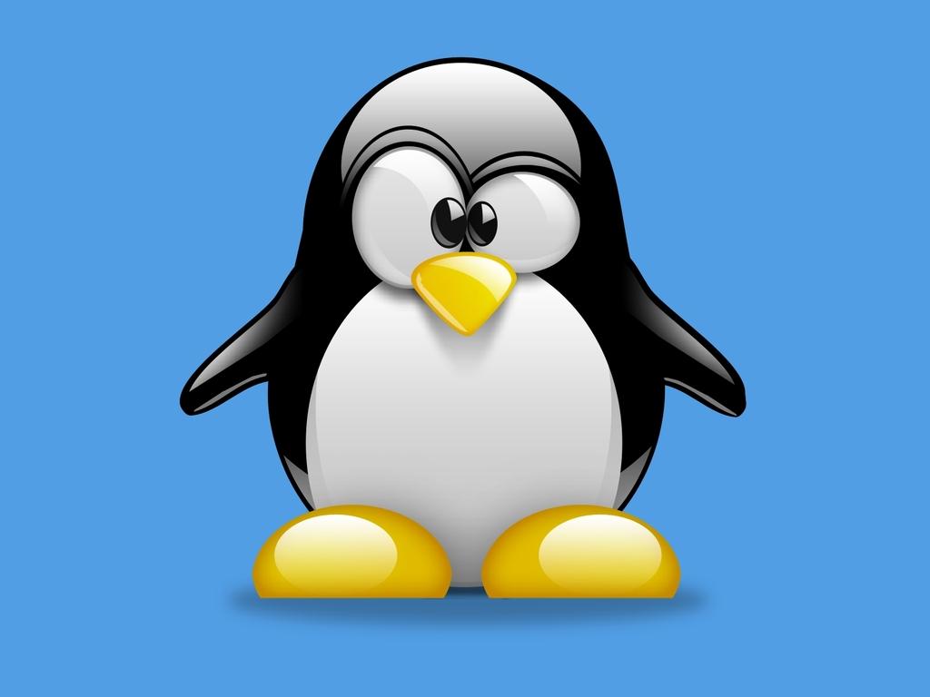 48   penguins desktop wallpaper on wallpapersafari