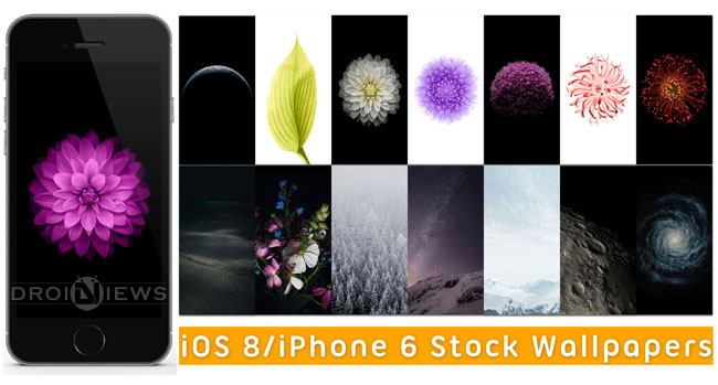 Download iOS 8 iPhone 6 Stock Wallpapers High Quality 650x349
