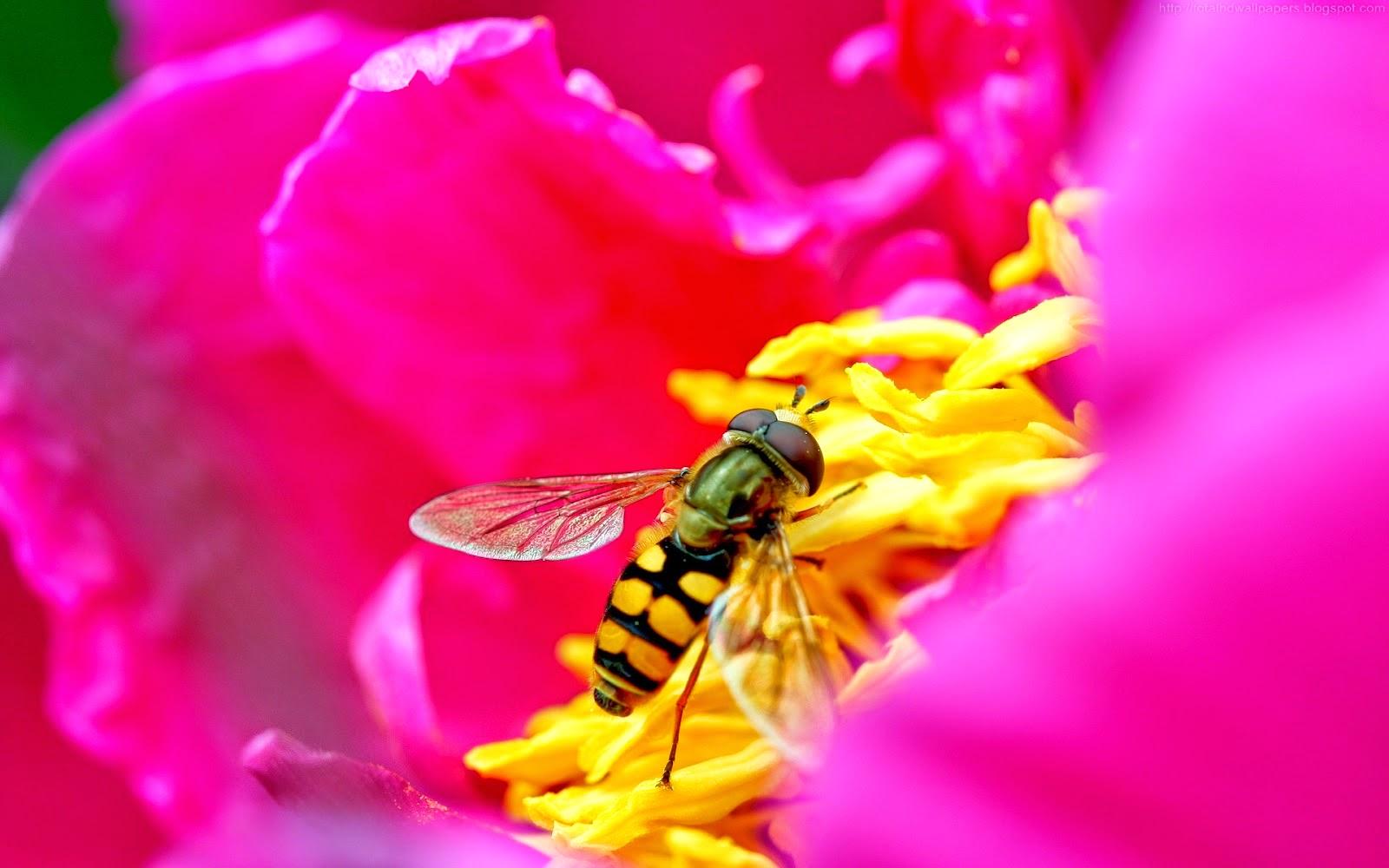 Beautiful Wallpapers Bee HD Wallpaper 1600x1000
