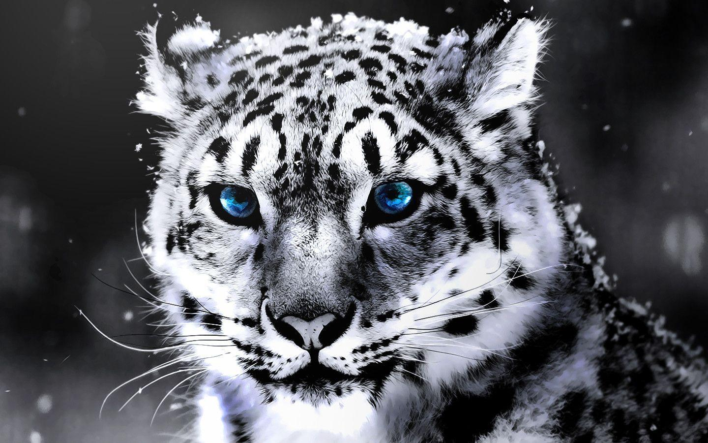 White Tiger Wallpapers HD 1440x900