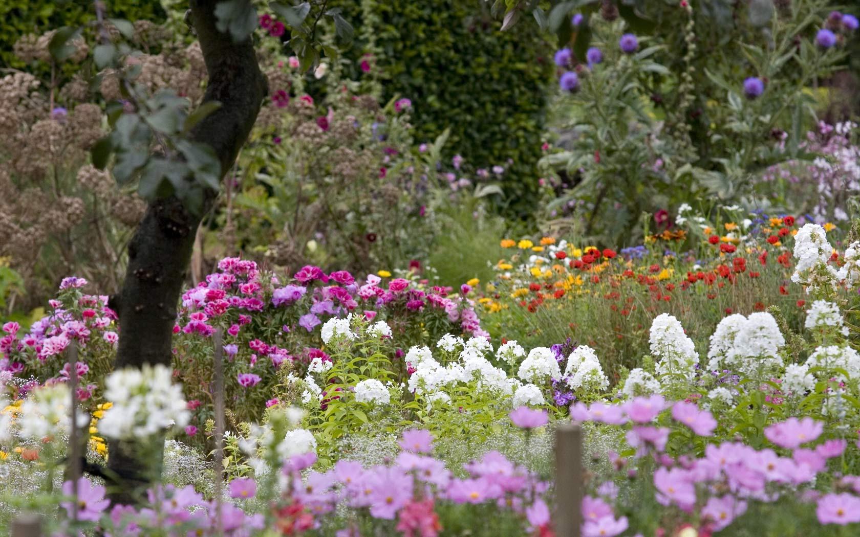 Flower Garden Backgrounds 1680x1050