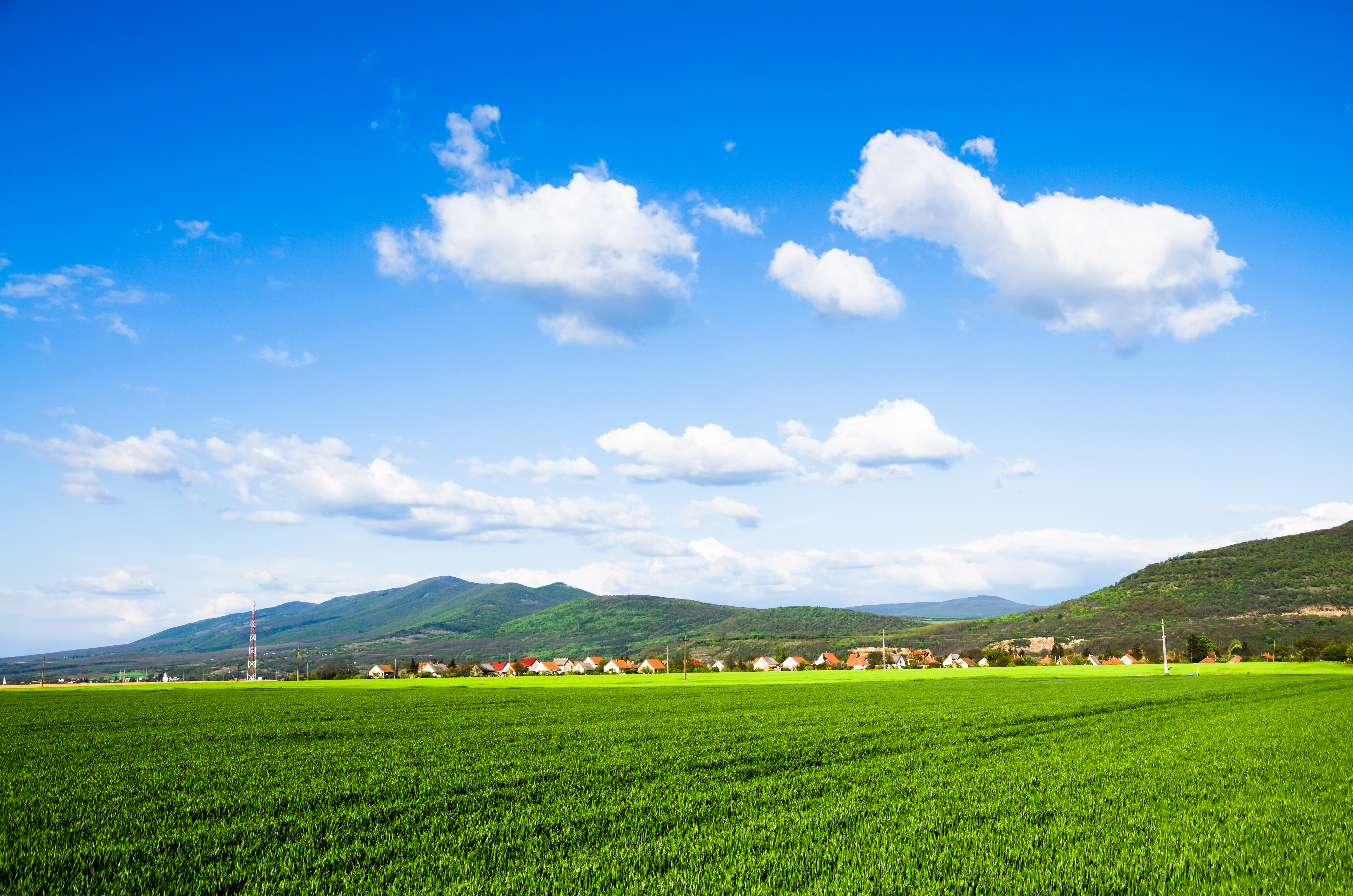 green field background   Tender and True Pet 4928x3264