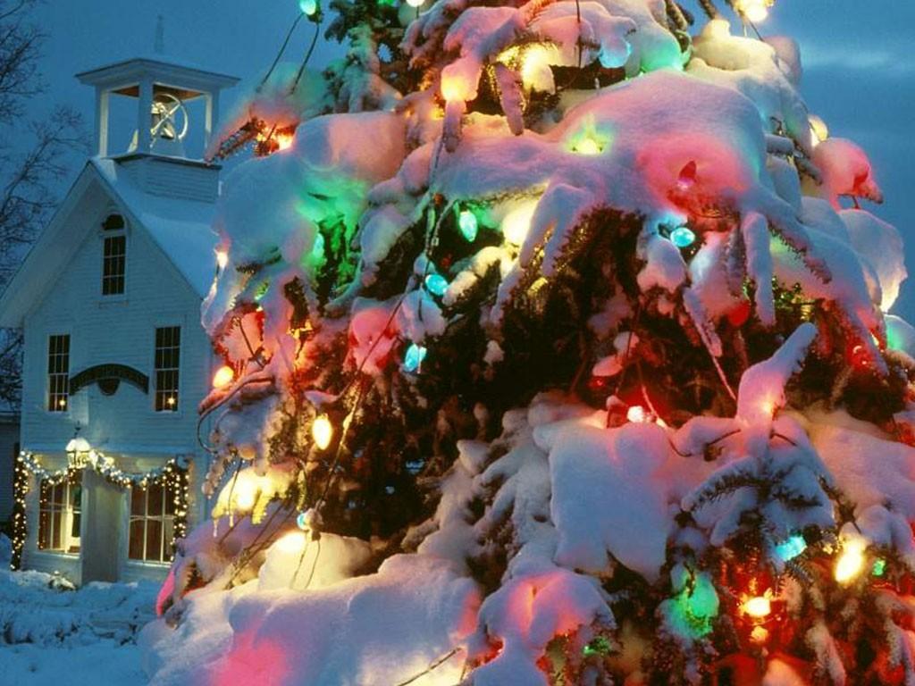 CHRISTMAS Wallpapers   Snow covered Christmas tree 1024x768