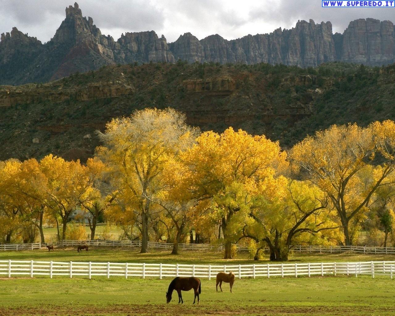 Sfondi desktop hd cavalli