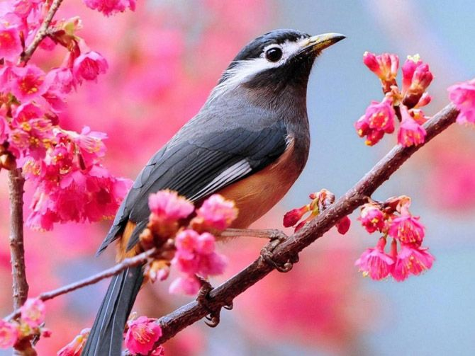 Beautiful Spring Pictures spring birds wallpaper free - wallpapersafari