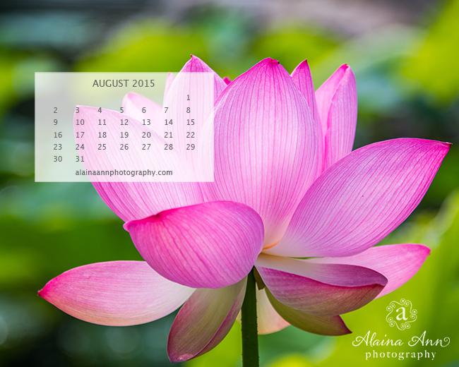 August 2015 Wallpaper Calendar Alaina Ann Photography 650x520