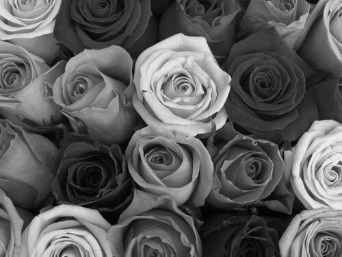 Black and white wallpapers tumblr wallpapersafari tumblr static background black and white flowers roses favimcom 500x375 mightylinksfo
