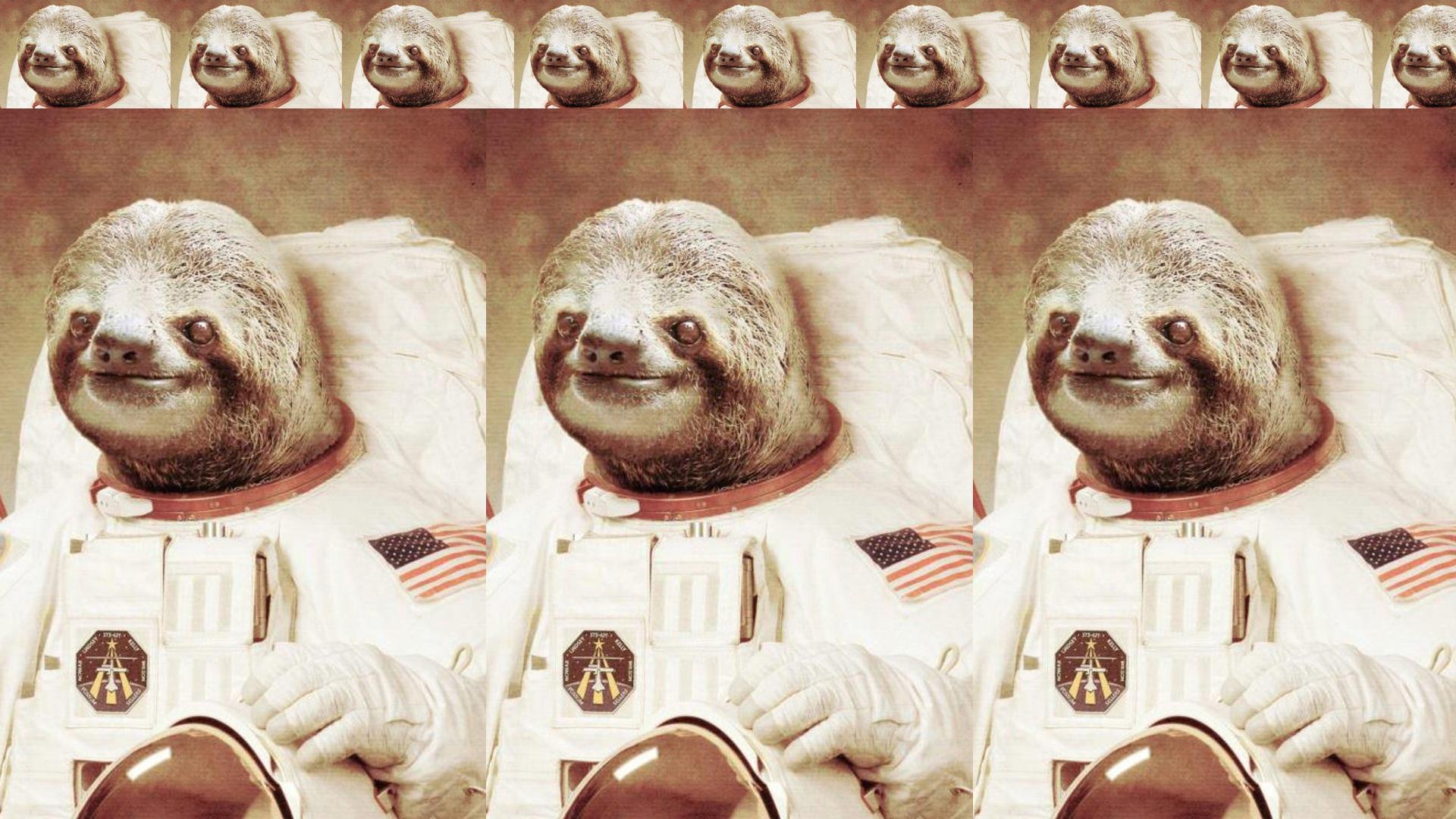 43+] Sloth Desktop Wallpaper on WallpaperSafari