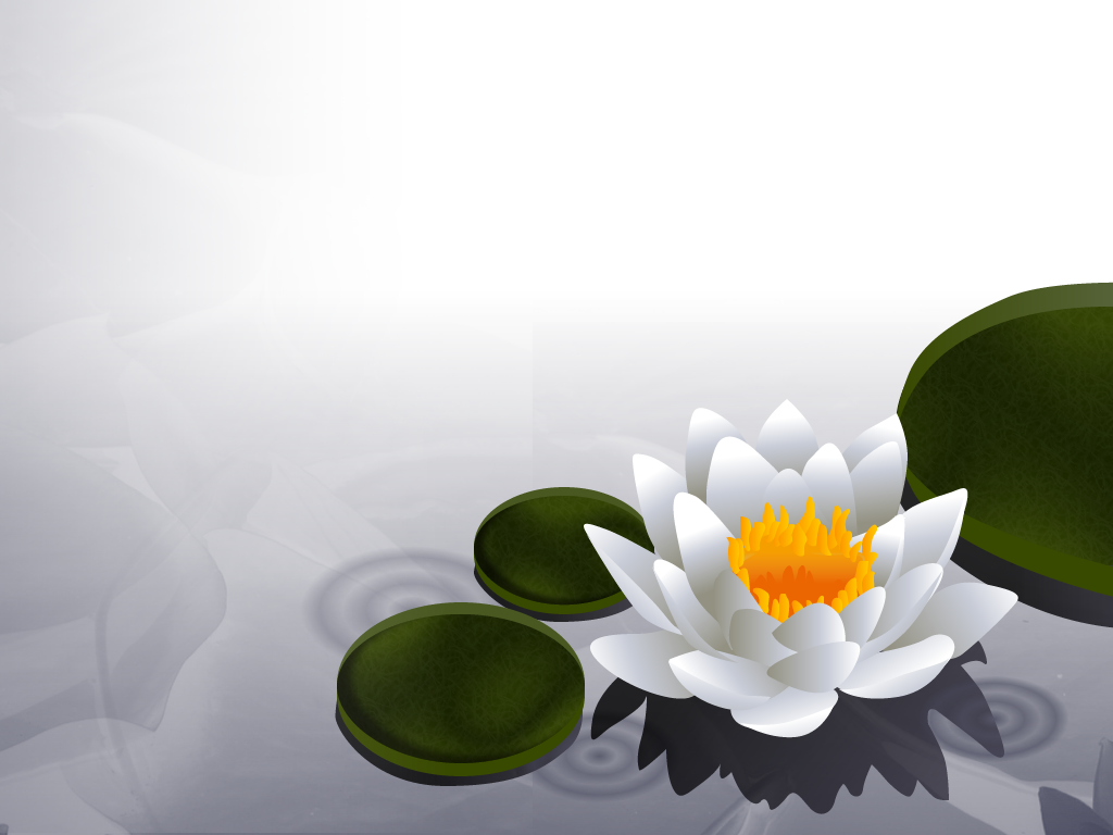 Download Lotus Flower Wallpaper Lotus Flower Wallpaper Lotus Dream