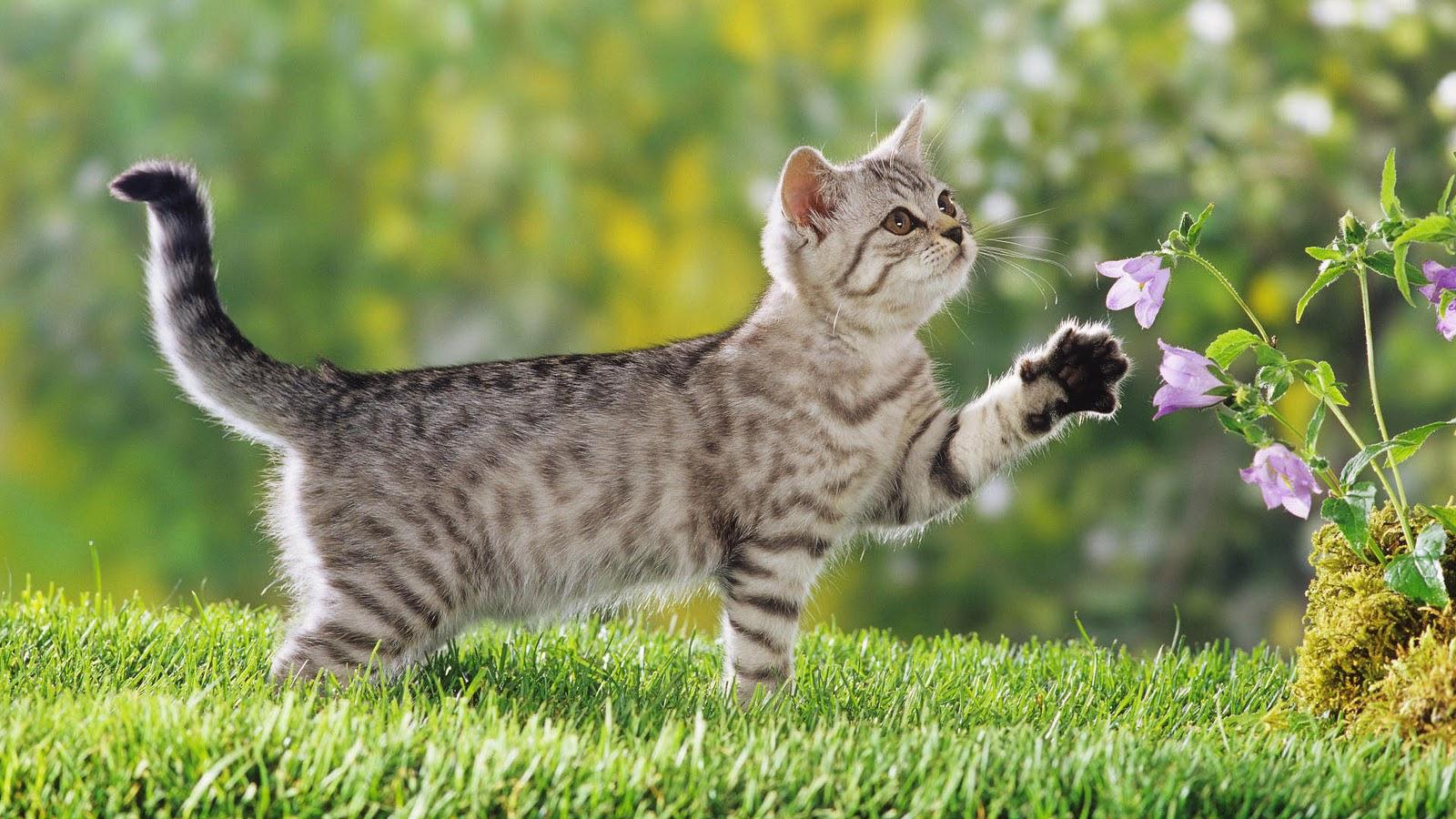 Kitten achtergronden jonge katjes hd kittens wallpapers foto 1jpg 1600x900