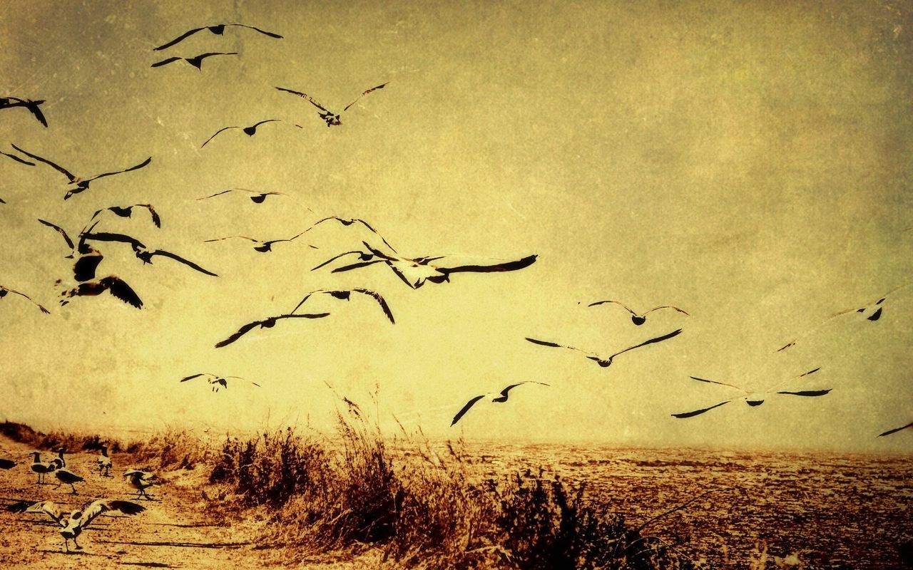 Birds flying wallpaper 16965 1280x800