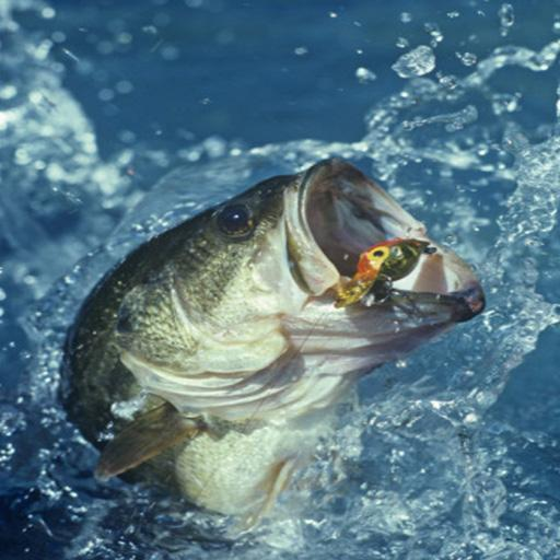 Bass Fishing Wallpaper Iphone v 28 Bass Fish Live Wallpaper 512x512