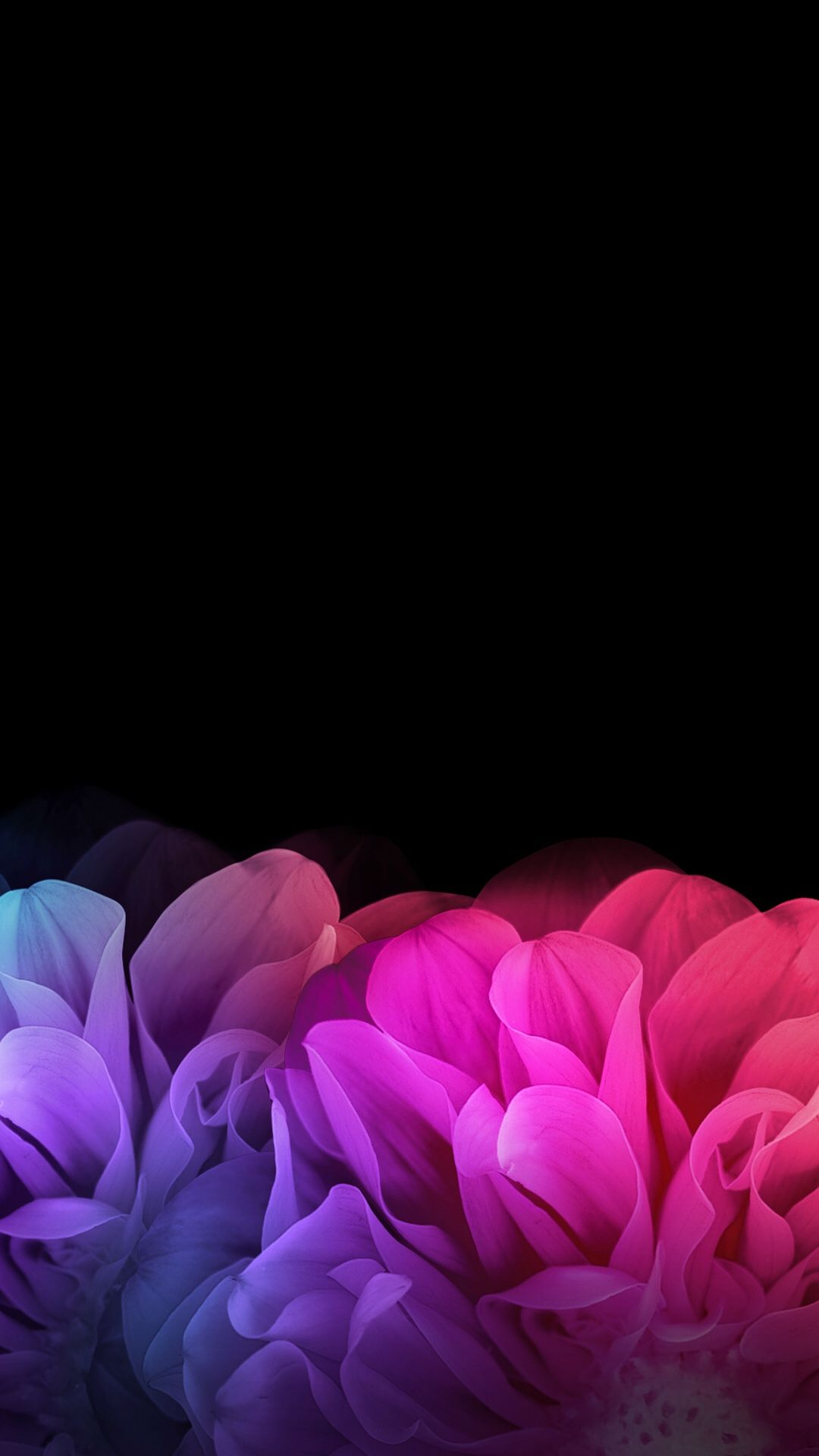 Free Download Black Floral Iphone Wallpaper Phone Backgrounds