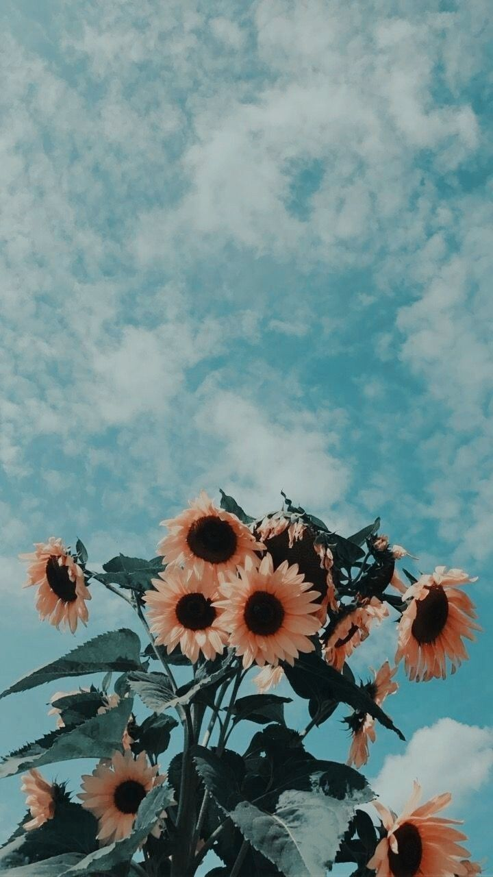 backgrounds aesthetic sky flowers nature background clouds 720x1280