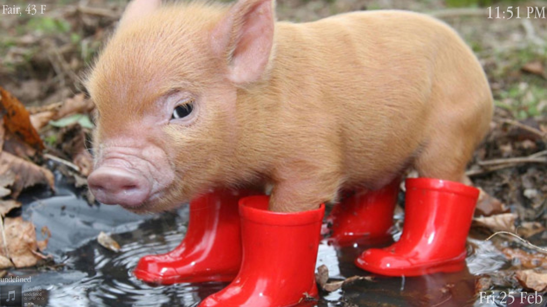 Pig in boots wallpapers and images   wallpapers pictures photos 1920x1080