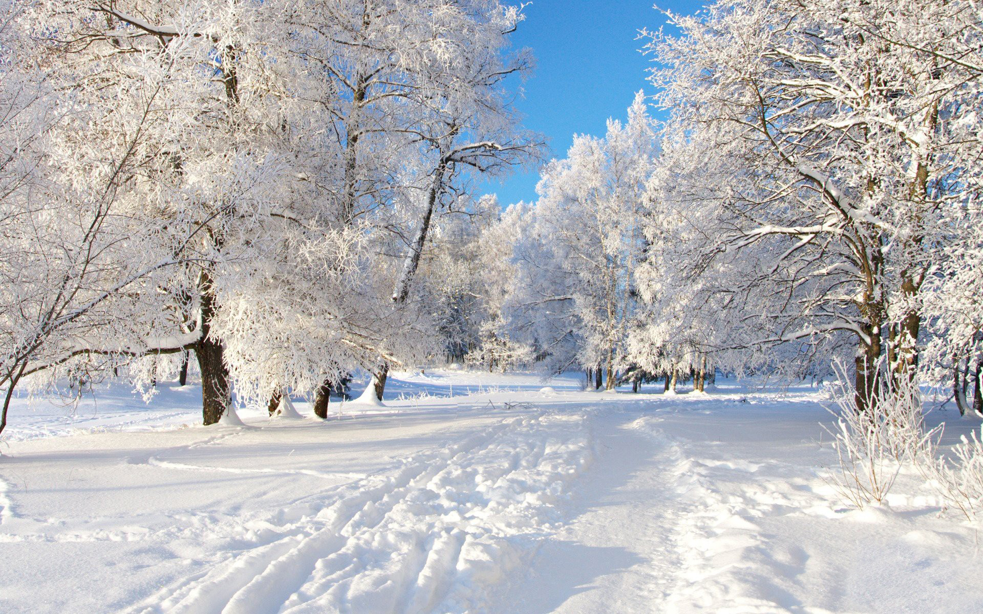 Winter Desktop Wallpaper HD Wallpapers 1920x1200