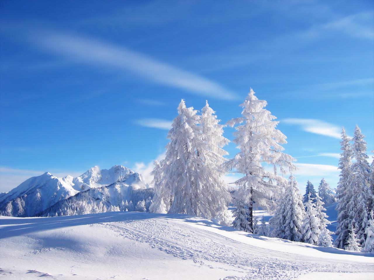 netwallpapersSeasonsWintersnow trees at winter desktop wallpaper 1280x960