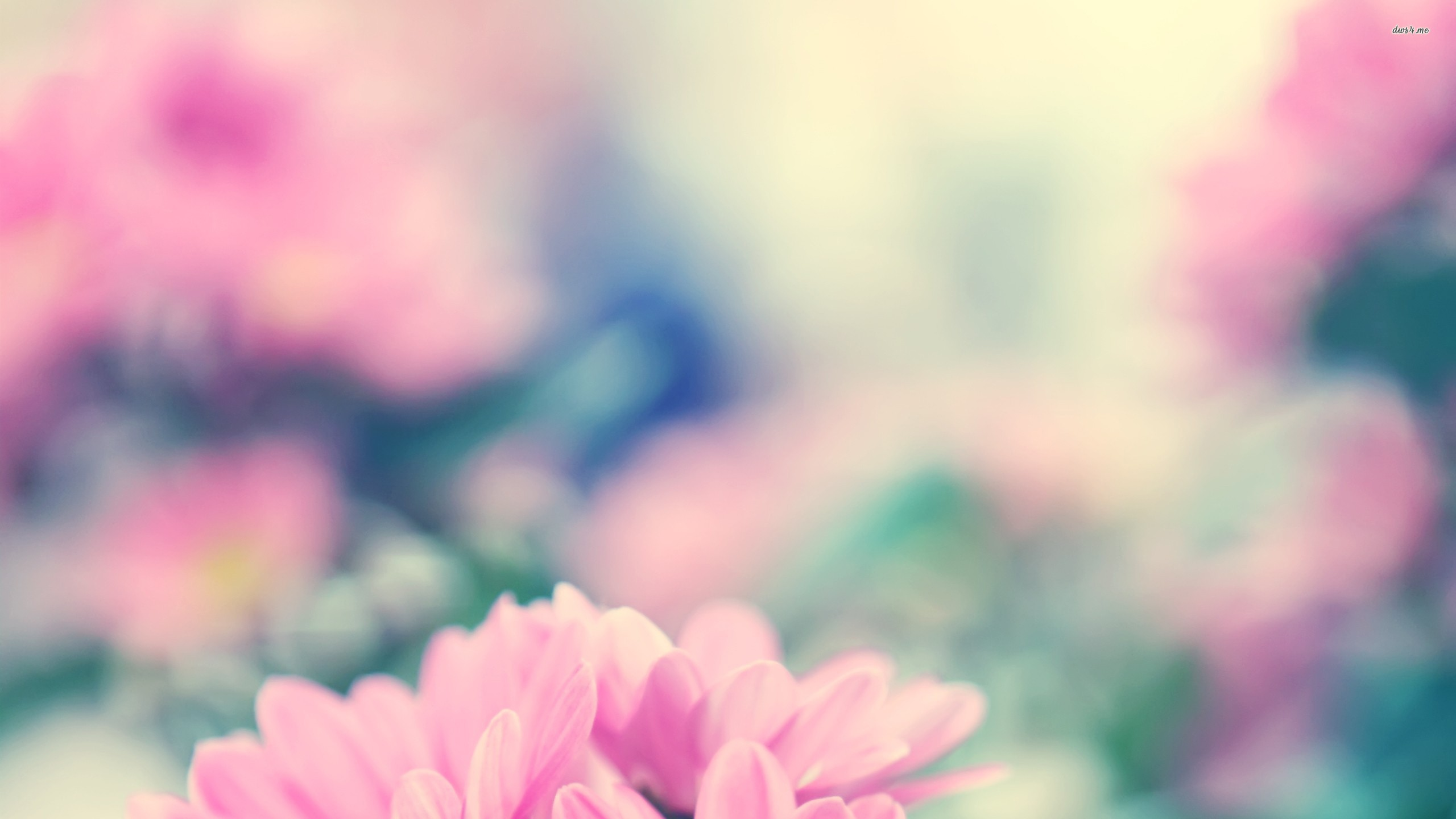 Daisies Tumblr Wallpaper Pink daisies wallpaper 2560x1440