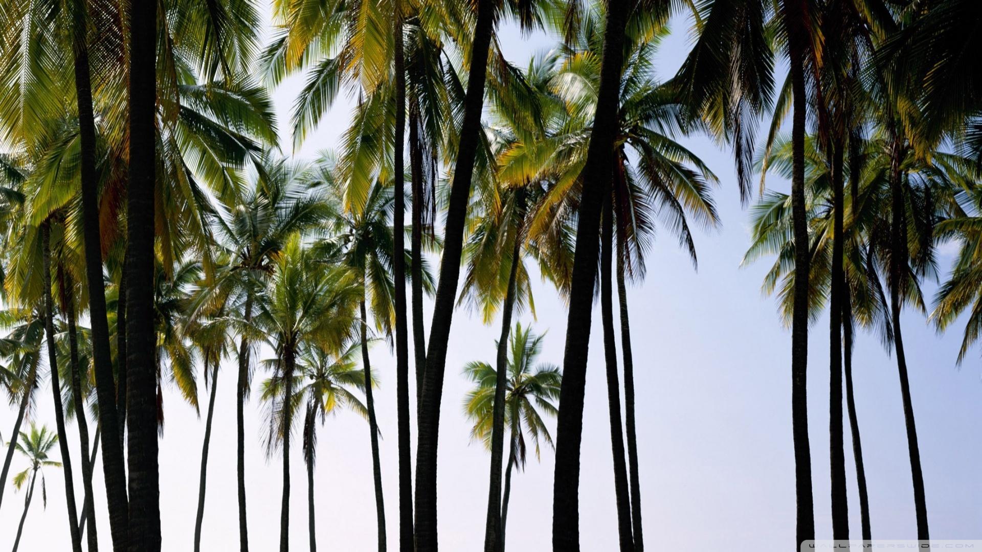 palm trees tumblr. Palm Trees 2 Wallpaper 1920x1080 Tumblr