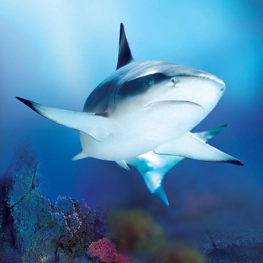 [50+] Live Shark Wallpaper Free On WallpaperSafari