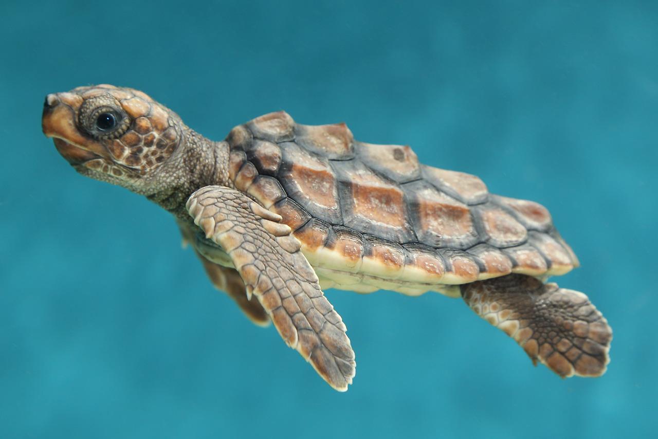 Baby Sea Turtles Wallpapers Gallery 1280x854
