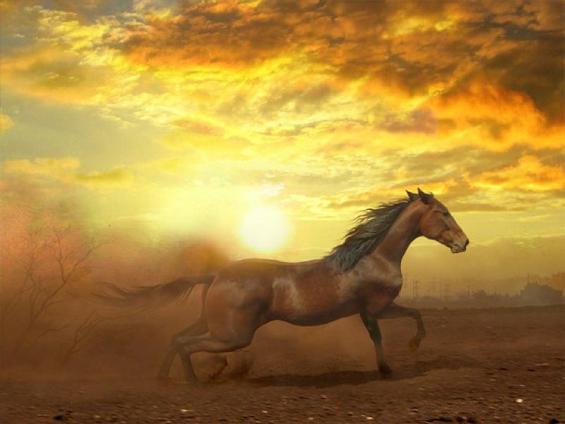 Cool Horse Backgrounds - WallpaperSafari