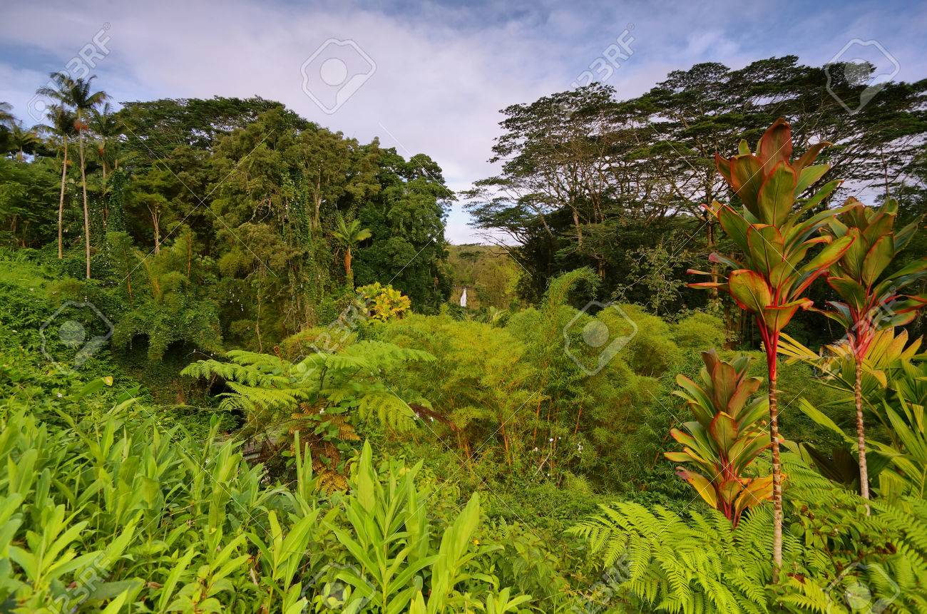 Tropical Vegetation With Akaka Falls At Background East Of Big 1300x861