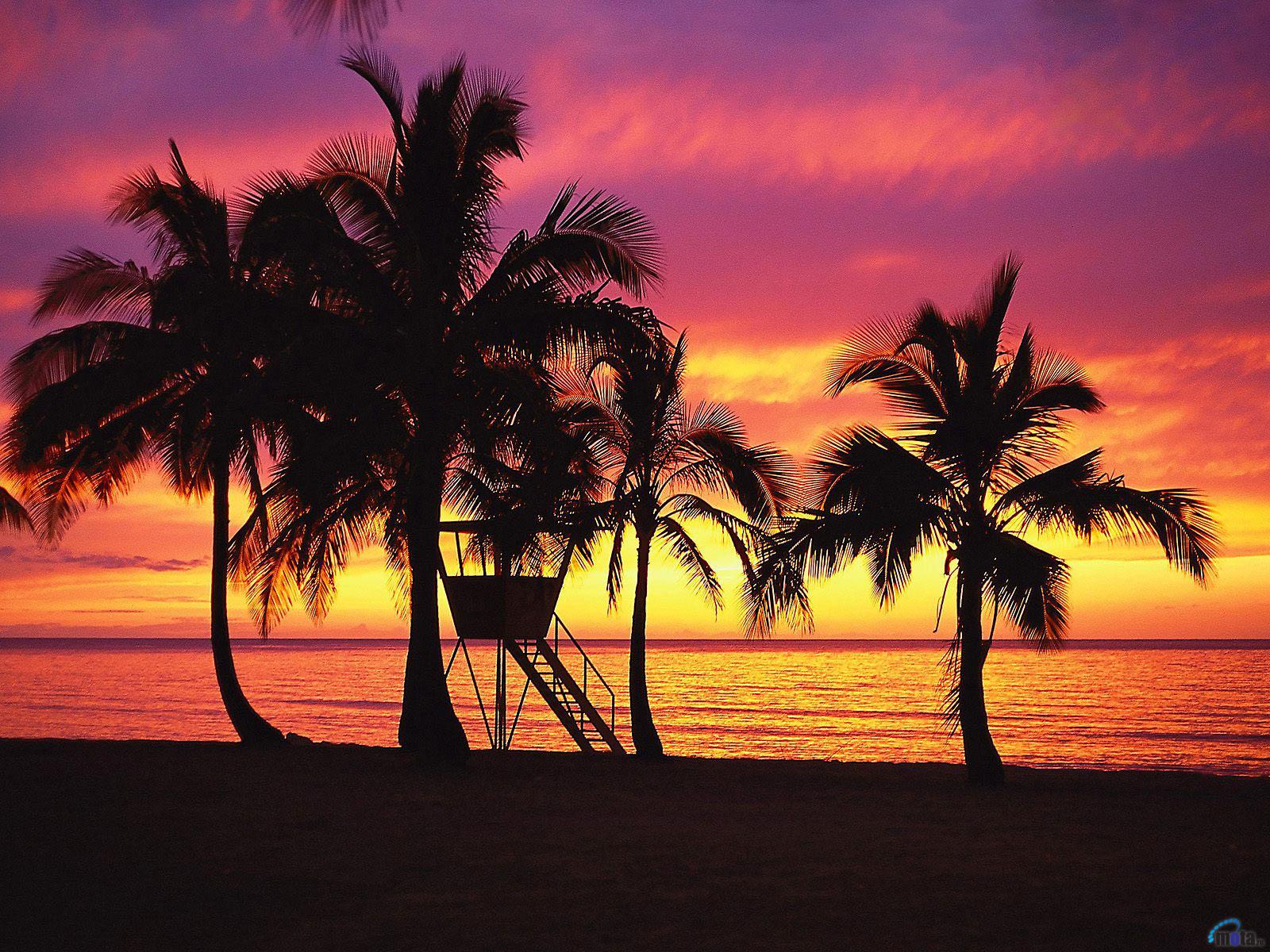 Wallpaper tropics beach sunset Oahu evening palm Hawaii Palm 1600x1200