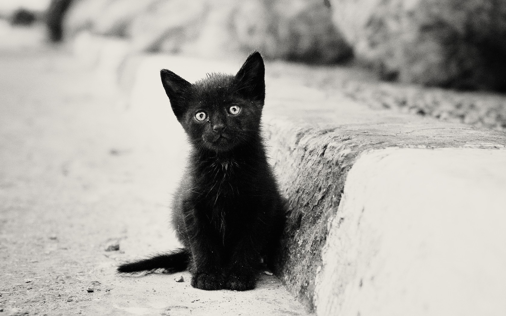 Free Download 1680x1050 Lonely Black Kitten Desktop Pc And Mac Wallpaper 1680x1050 For Your Desktop Mobile Tablet Explore 45 Black Kitten Wallpaper Cute Kitten Pictures Wallpaper Kitten Wallpaper Black