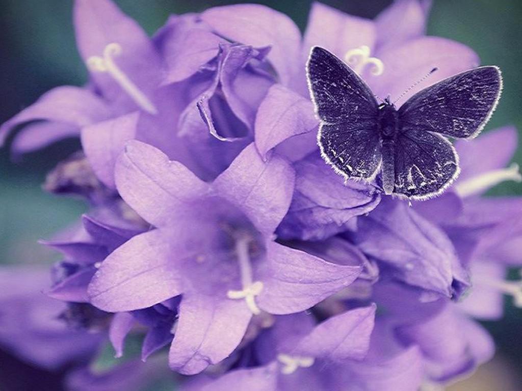 Purple Flower Wallpapers HD wallpaper background 1024x768