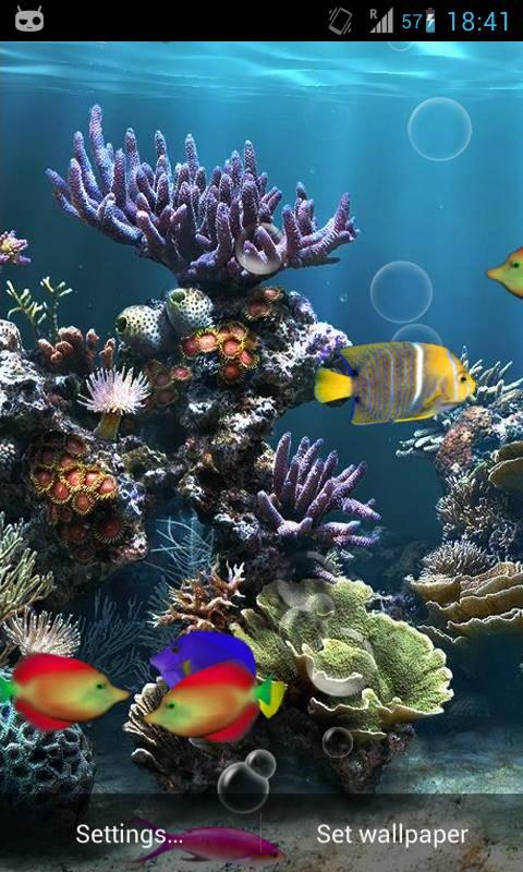 fish aquarium live wallpaper now watch fishes moving in aquarium as 480x800