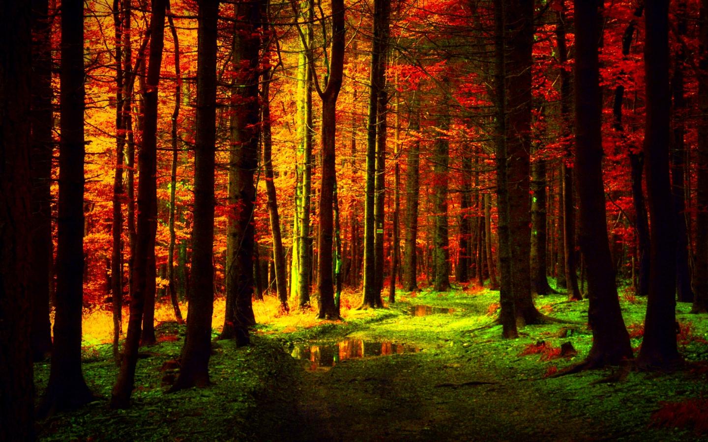 FREE HEADER TEMPLATES 12 desktop wallpapers Autumn 1440x900 1440x900